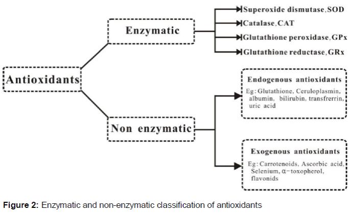 role of antioxidants in human body pdf